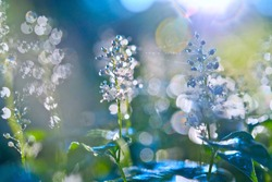 Background defocusing with beautiful bokeh in the drops of dew and spring flowers of the forest.