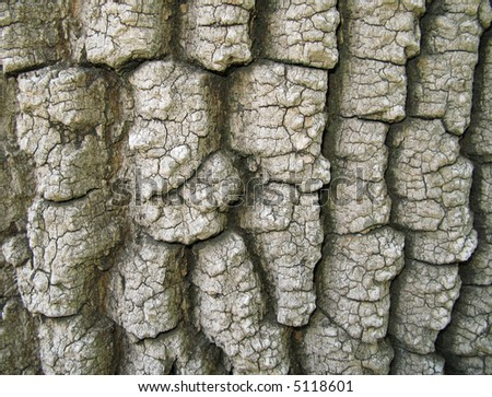 Background - Detail of a tree bark texture