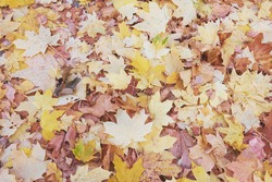 Background - fallen leaves autumn