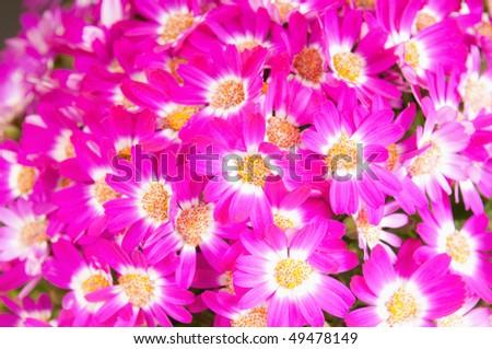 background floret