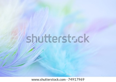 Background for design with soft colorfull feathers