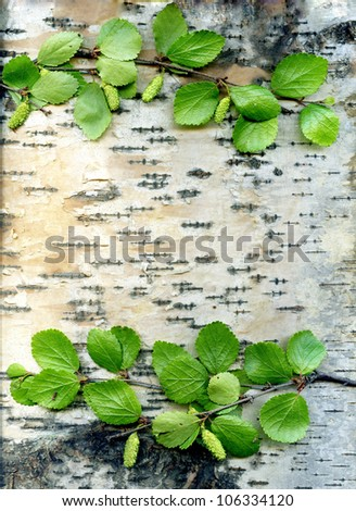 background for text on birch with green sheet