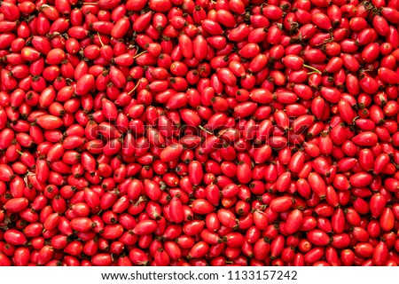 Background fresh red Rosehips, fresh Berries from the dog rose Stock photo ©