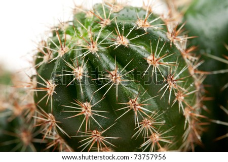 Background from a cactus in the drops Rozsa #73757956