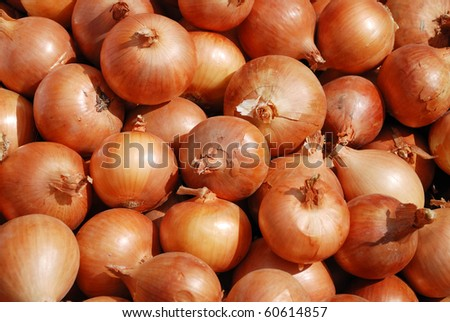 Background from a crop onion