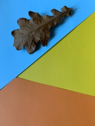background from color blocks yellow, blue, orange. colored sheets of paper on blue background lies a dry autumn oak leaf. Colorful minimalism