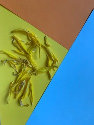 background from color blocks yellow, blue, orange. colored sheets of paper on yellow dry autumn yellow sunflower petals lie. minimalistic abstraction