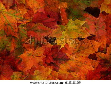 background from colored maple foliage