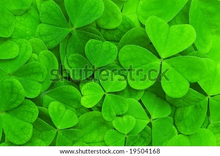 background from green clover leaf
