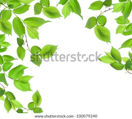 Background from green leaves.jpg