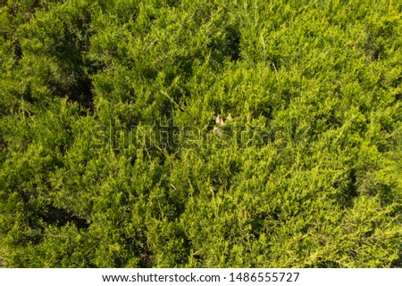 Background from green plants. Hedge. Creative vintage background #1486555727