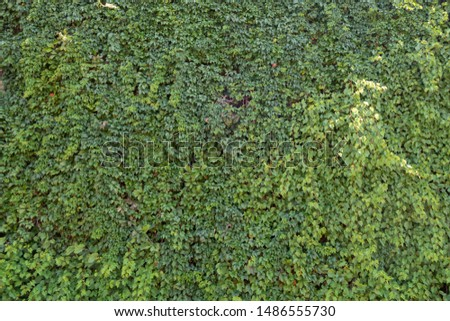 Background from green plants. Hedge. Creative vintage background #1486555730