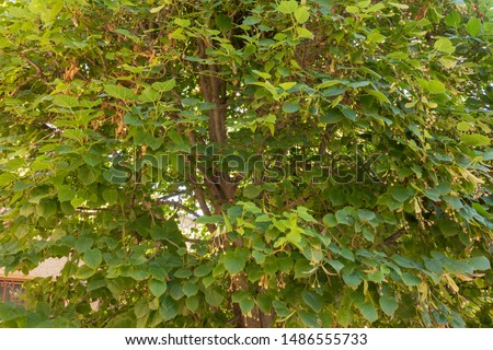 Background from green plants. Hedge. Creative vintage background #1486555733