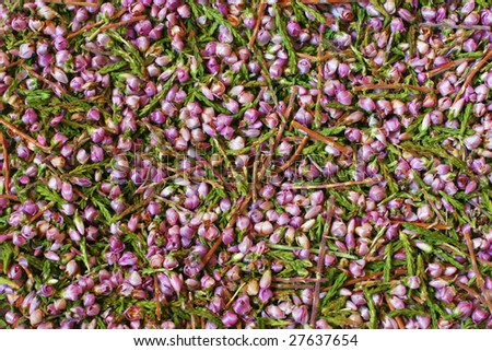 Background from small flowers of a medicinal grass a heather close up