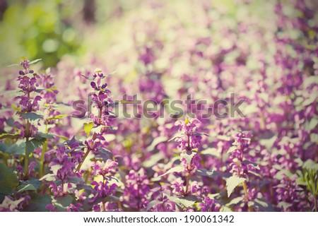 Background from tender soft violet blue beautiful flowers, floral vintage  background #190061342