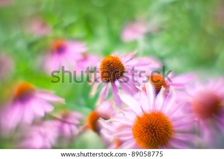 "Background from the flowers of Echinacea shooted on ""lens baby"""