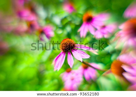 """Background from the flowers of Echinacea shooted on """"lens baby"""""""