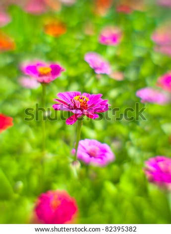 """Background from the flowers of zinnia shooted on """"lens baby"""" - stock photo"""