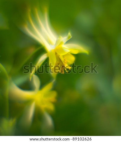 """Background from the yellow flowers shooted on """"lens baby"""" - stock photo"""