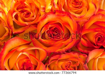 Background from yellow with red roses