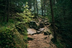 background Green Mountain Forest wood . Stone path stairs