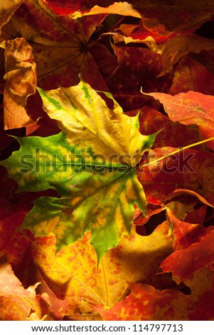Background group autumn leaves.