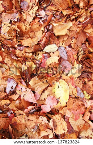 Background group autumn orange leaves