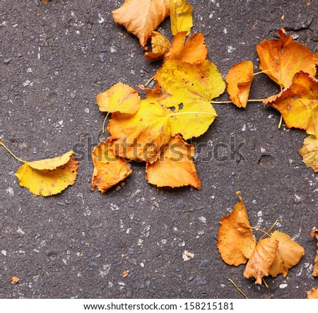 Background group autumn orange leaves green Outdoor background