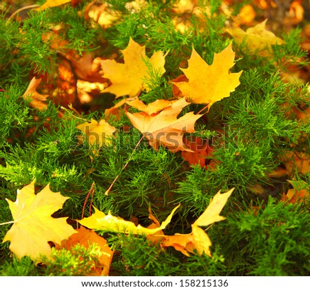 Background group autumn orange leaves green Outdoor background nature