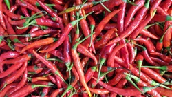 Background group of Fresh red chili in the organic market. Thai chilli is very spicy and has Capsaicin substance used for analgesic topical oinment. Tropical herb in Thailand concept
