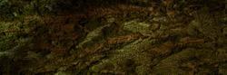 background grunge texture of tree bark closeup