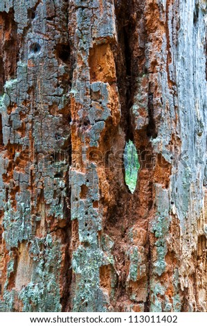 background image of a bright redwood tree with a unique hole straight through it with little bits of moss on the bark