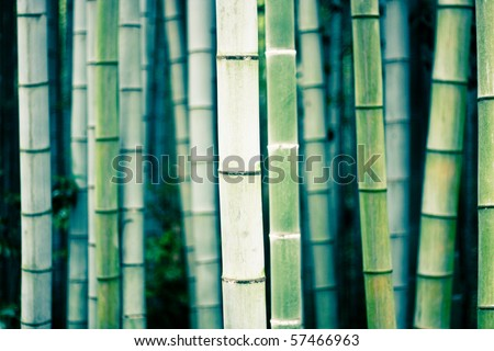 Background image of bamboo. Cross processed