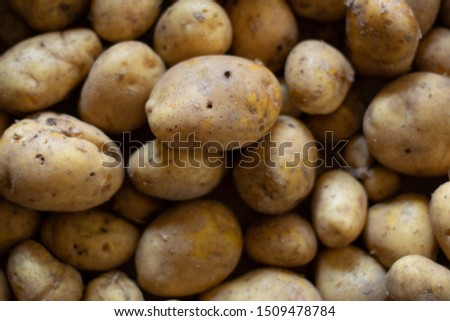 Background image of garden potatoes, Organic nature texture