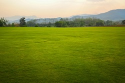 Background image of lush grass field