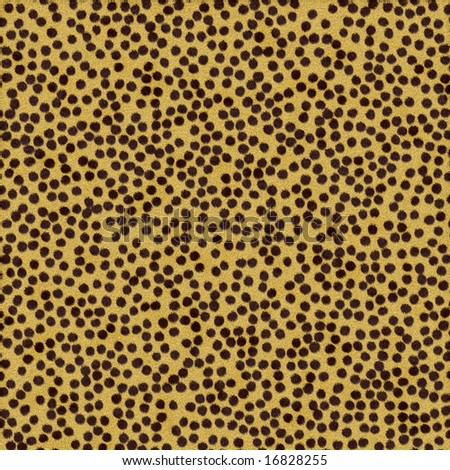 Cheetah Skin Texture With Cheetah Fur Texture