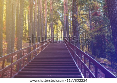 background, long stairway in the forest, toned