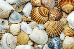 background made of a closeup of a pile of seashells on the sand