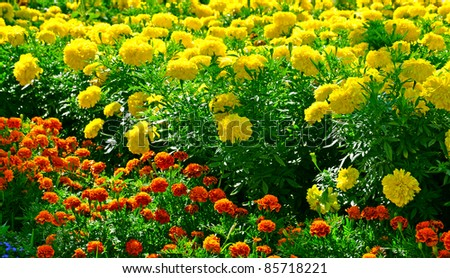Background made of colorful flowers