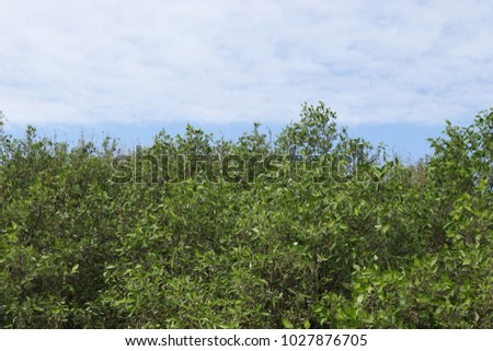 Background natural green tree and sky background, tree top view sky mangroves forest #1027876705