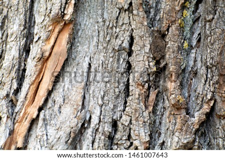 Background natural pattern. Old rind wood, tree skin. Rough surface. Abstract forest material closeup. Tree bark texture. woody vines, shrubs. Forceful layers of stem and roots. Brown and yellow spots #1461007643