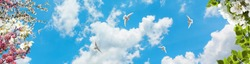 background of a beautiful sky with spring flowers and flying pigeons