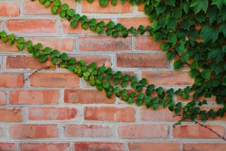 background of a brick wall with ivy vines