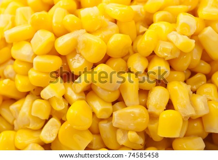 Background of a bunch or fresh grains of sweet corn