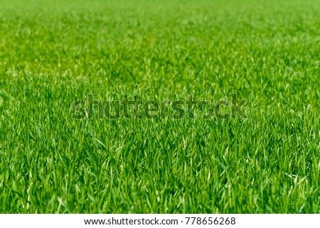 Background of a green grass. Green grass texture #778656268