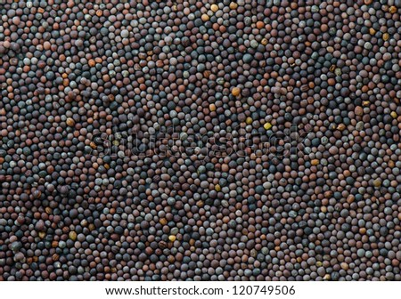 Background of a layer of canola seed on a metal sheet #120749506