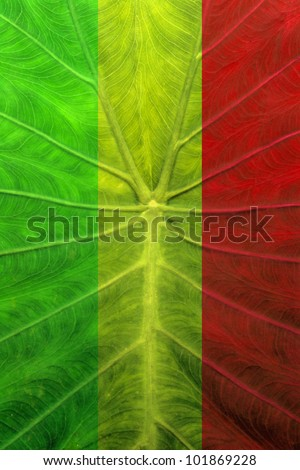 background of a leaves coloration