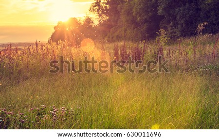 Background of a meadow in the afternoon - Meadow in the afternoon. A swarm of midges over tall grass in front of the sun. Blurred background.