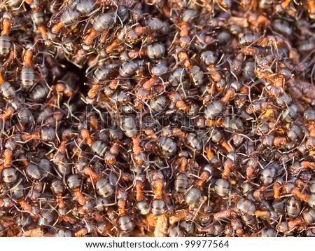 Background of a Red Ant colony (Formica rufa)