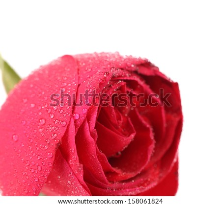 Background of a wet red rose. Whole background.
